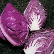 Cabbage Kalibos Red -Pointed - Appx 270 seeds